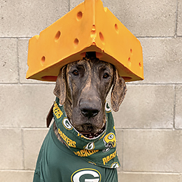 cutest-packers-pet